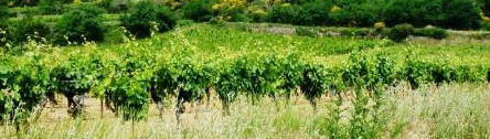 bandeau_viticulture
